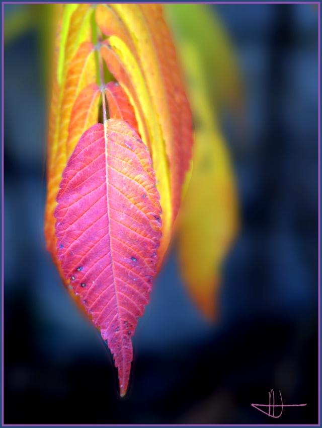 Vos plus belles photos du mois de novembre 2009 Autumn10