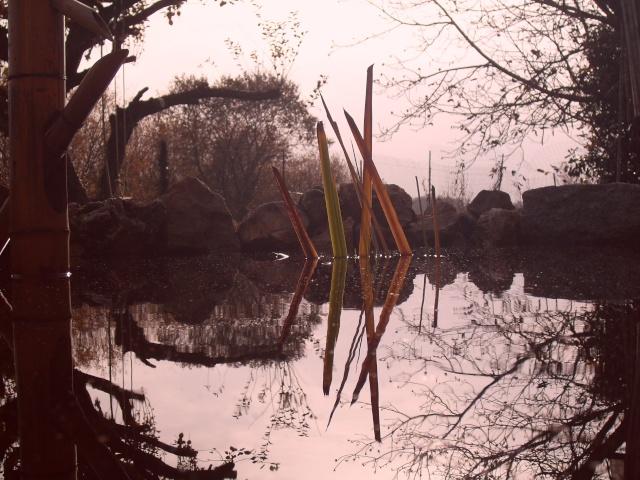 Votre photo pour Décembre 2009 - Page 2 Sdc12124