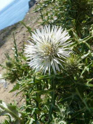 fleur P1030711