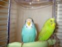 femelle agressive et le pecking order Violet42