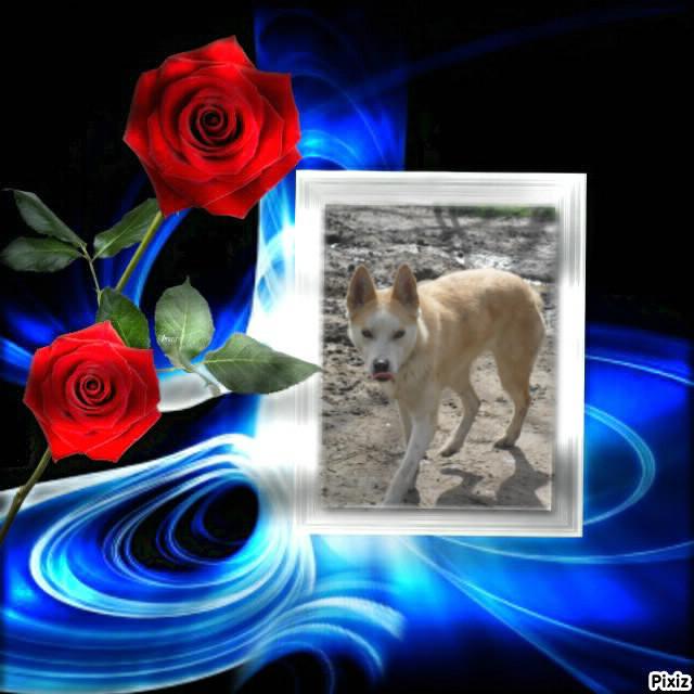 URGENCE chiens à placer  L EDEN VALLEY.ASSOCIATION (26) Cannel10