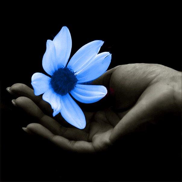 Joyeux anniversaire Persephone et Fleur de lune 6620_110