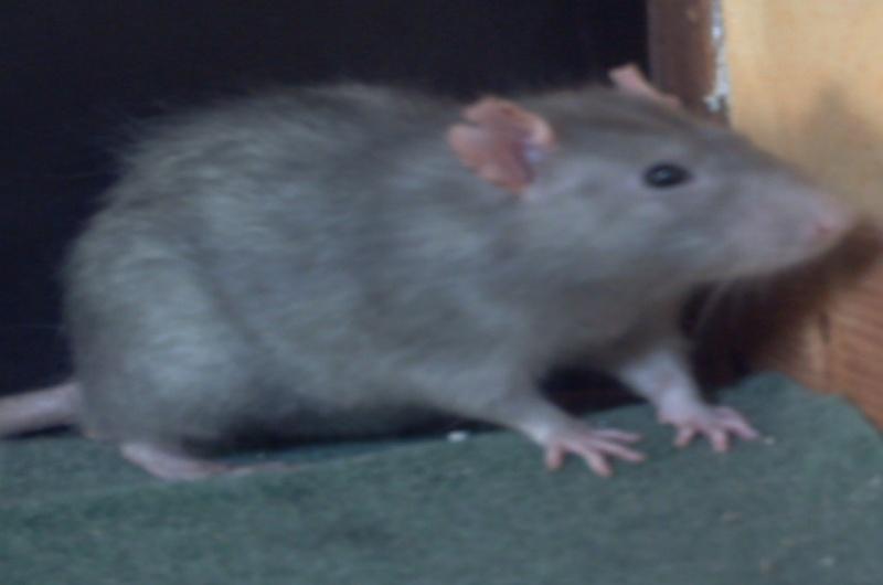 bébé ratous à réséver Sky_2812