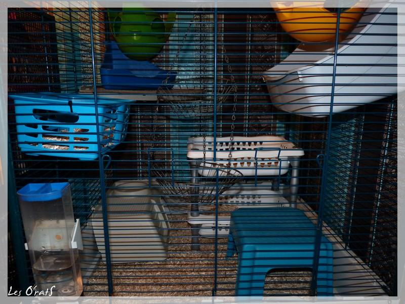Cage furet tower  P1120010