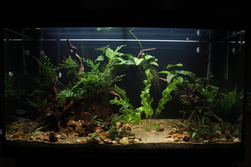 360L fluviatile africain Img_0712