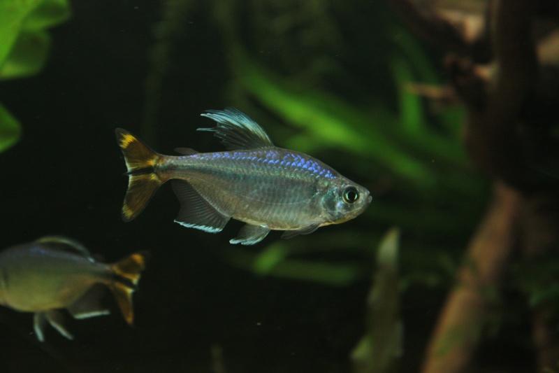 360L fluviatile africain Img_0719