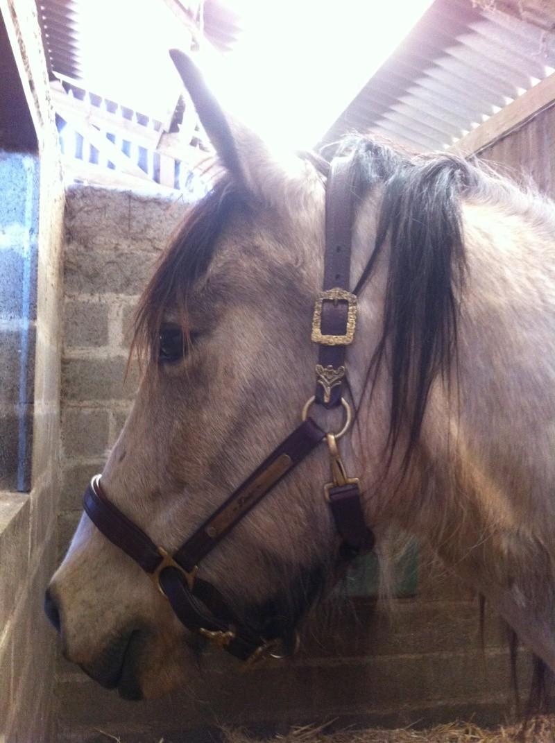 materiel cavalier et cheval GROSSES PROMO JUSQUE FIN DECEMBRE!!! Img_1520