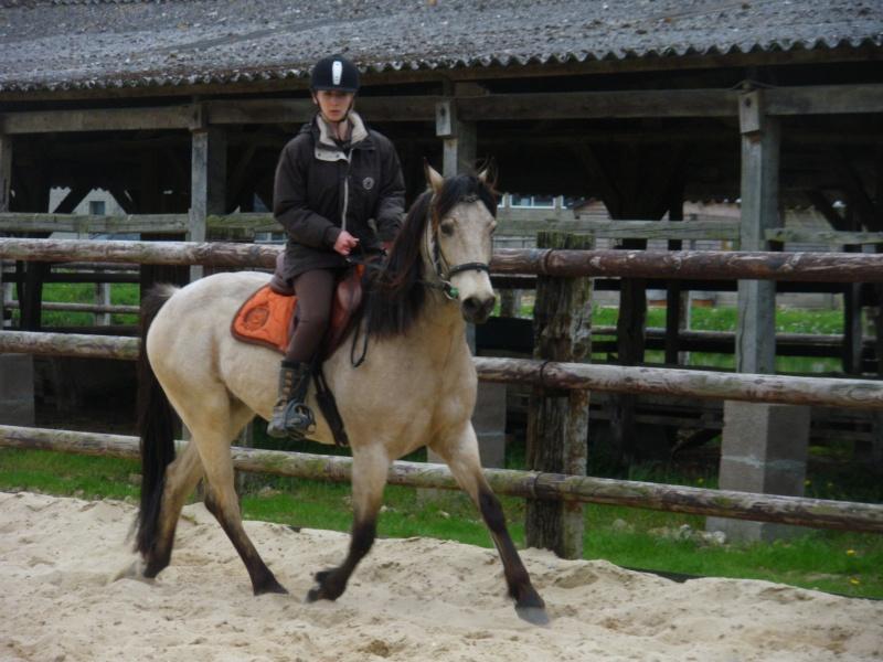 materiel cavalier et cheval GROSSES PROMO JUSQUE FIN DECEMBRE!!! Imgp0210