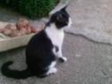 Bleki-crno beli macak! Bas_sa11