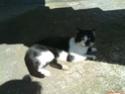 Bleki-crno beli macak! Bleki10