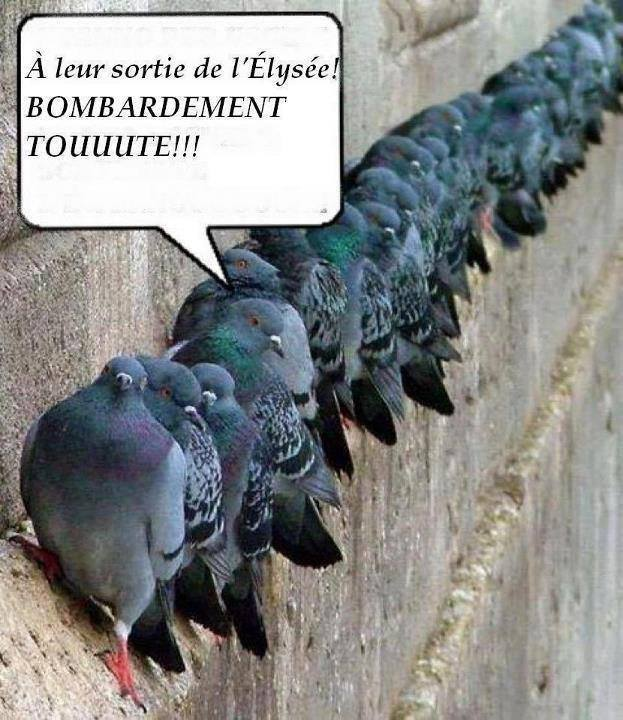 Humour en image ... - Page 4 16498110