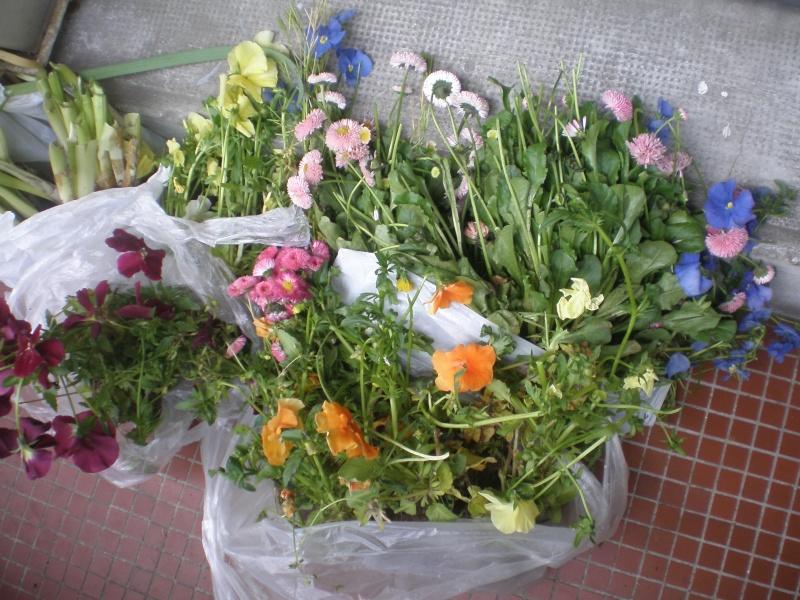 Plantes annuelles d'hiver récupérées P5150010