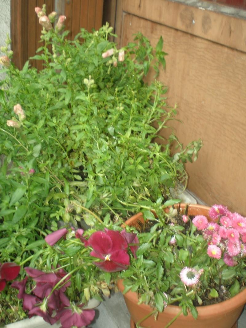 Plantes annuelles d'hiver récupérées P5160014