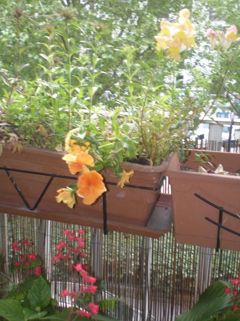 Plantes annuelles d'hiver récupérées P5160015