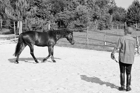 cheval au postérieur gauche en fin d'appui