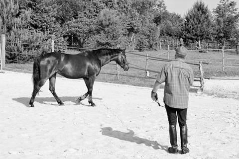cheval au postérieur droit en fin d'appui