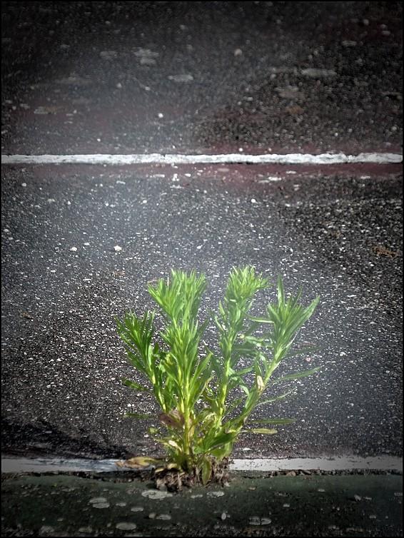 [photos diverses] et question Vert_310