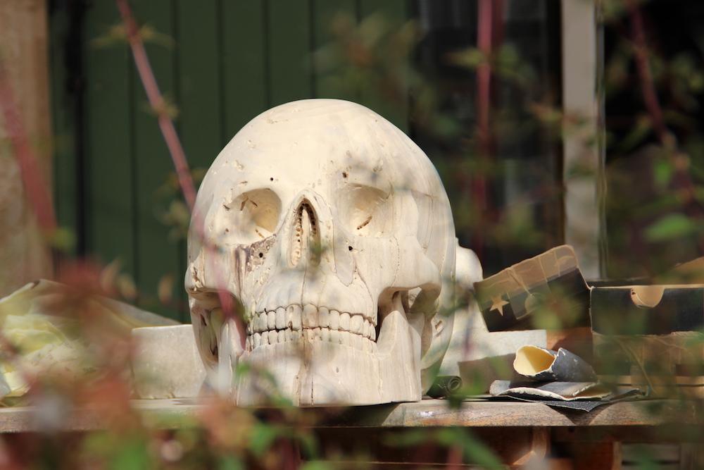 Crâne en micocoulier échelle 2 Img_2110