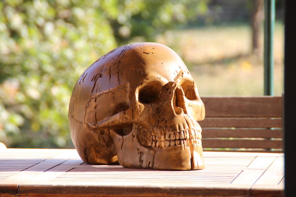 Crâne en micocoulier échelle 2 Img_2217