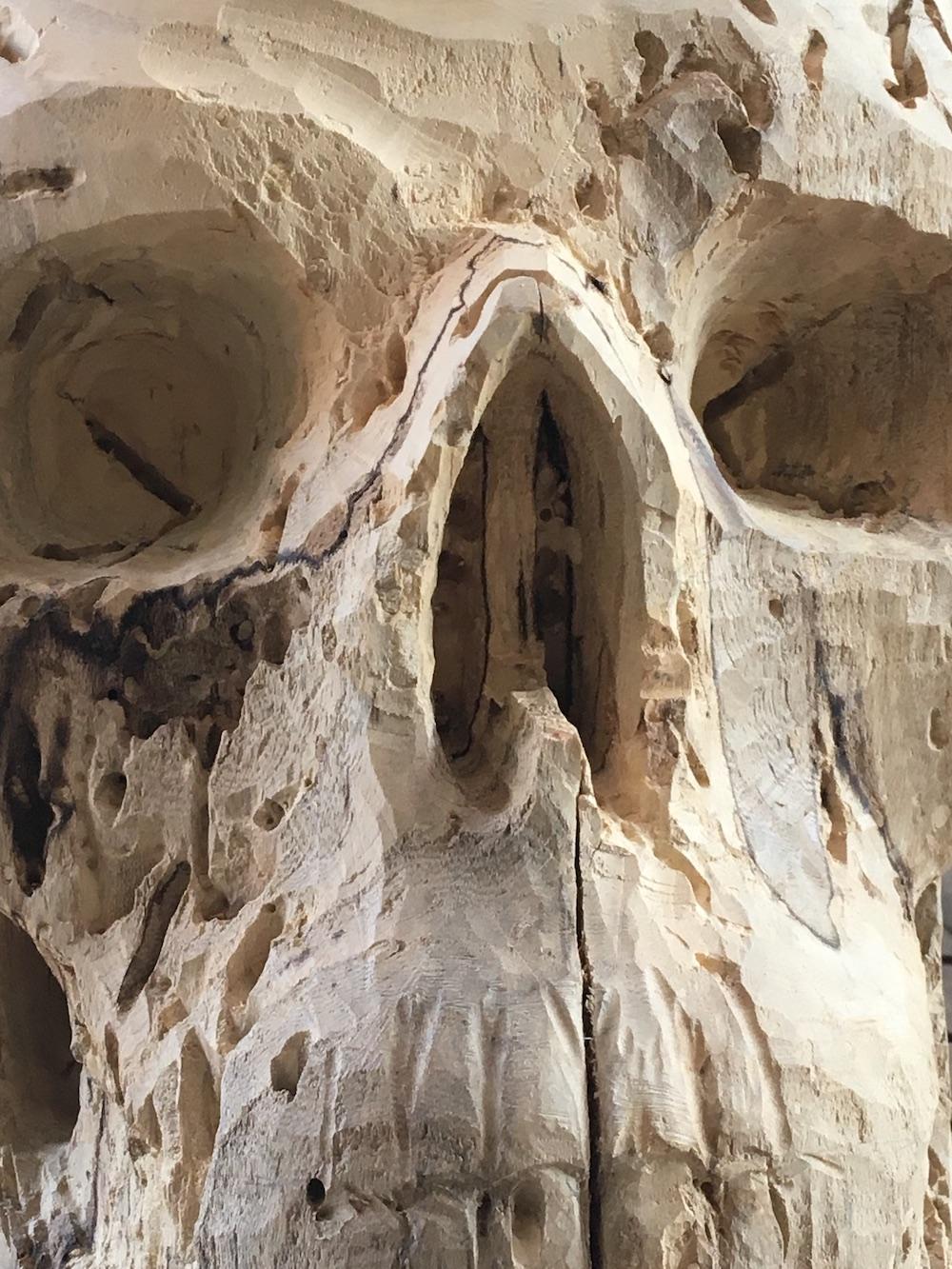Crâne en micocoulier échelle 2 Img_3610
