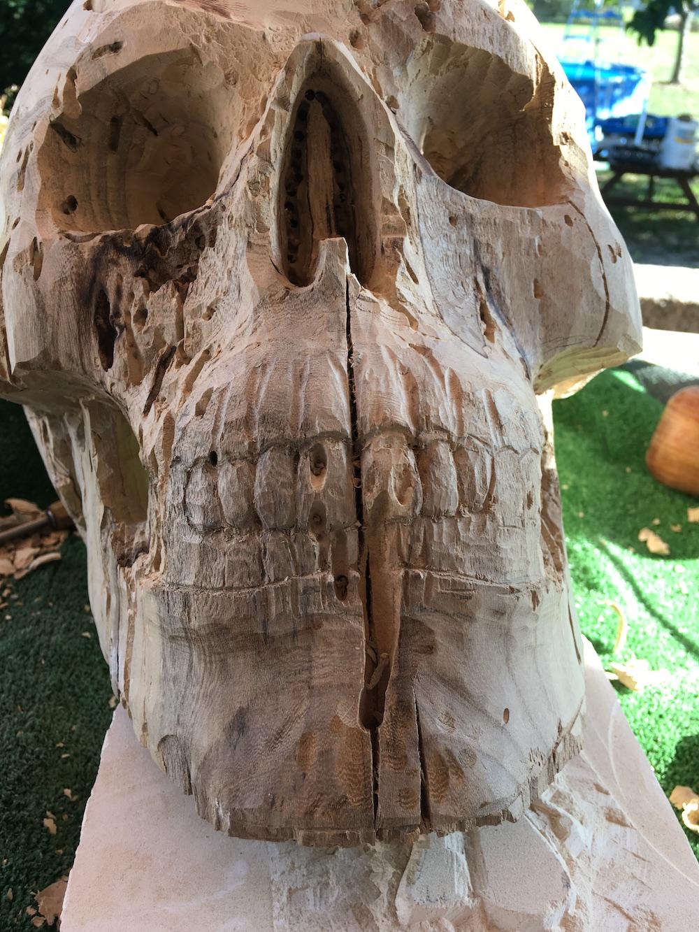 Crâne en micocoulier échelle 2 Img_3612