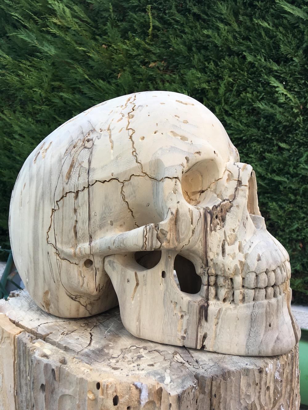 Crâne en micocoulier échelle 2 Img_3711
