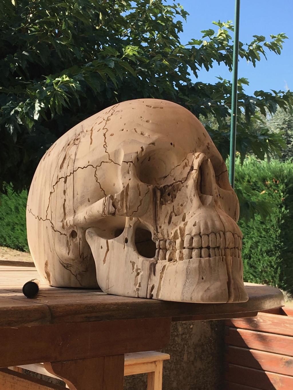 Crâne en micocoulier échelle 2 Img_3712