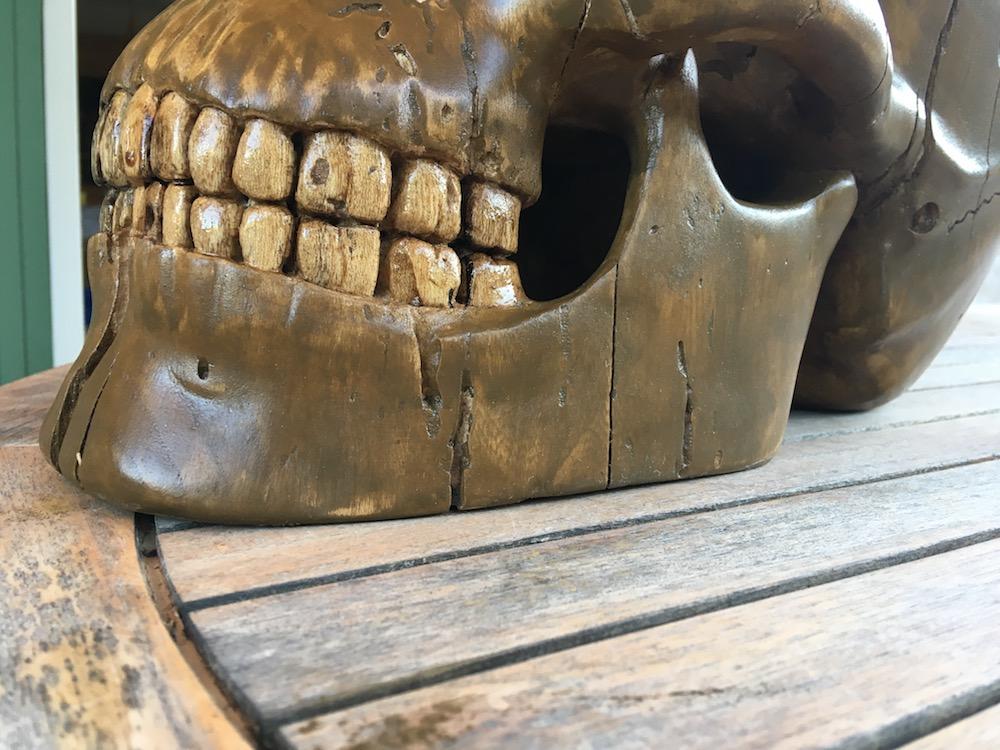 Crâne en micocoulier échelle 2 Img_3810