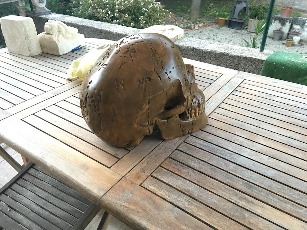 Crâne en micocoulier échelle 2 Img_3811