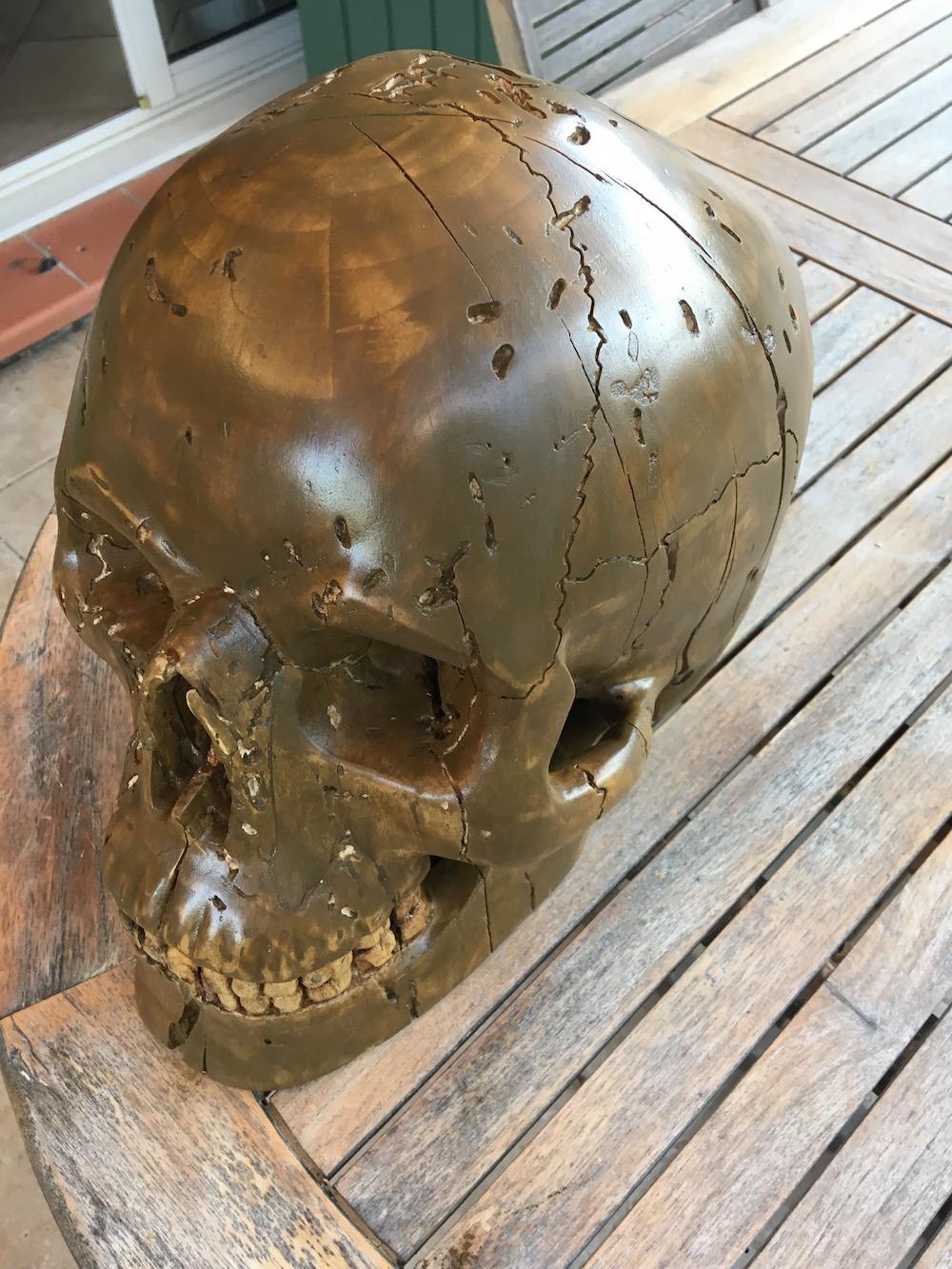 Crâne en micocoulier échelle 2 Img_3813