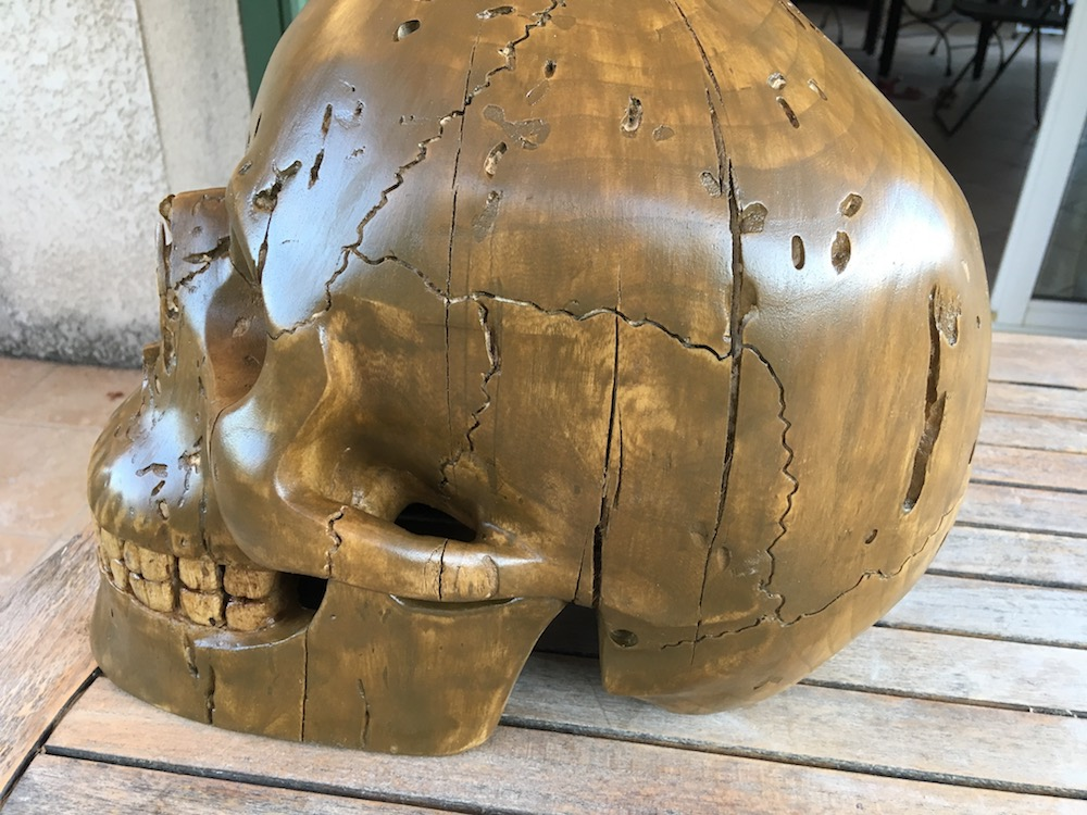Crâne en micocoulier échelle 2 Img_3815