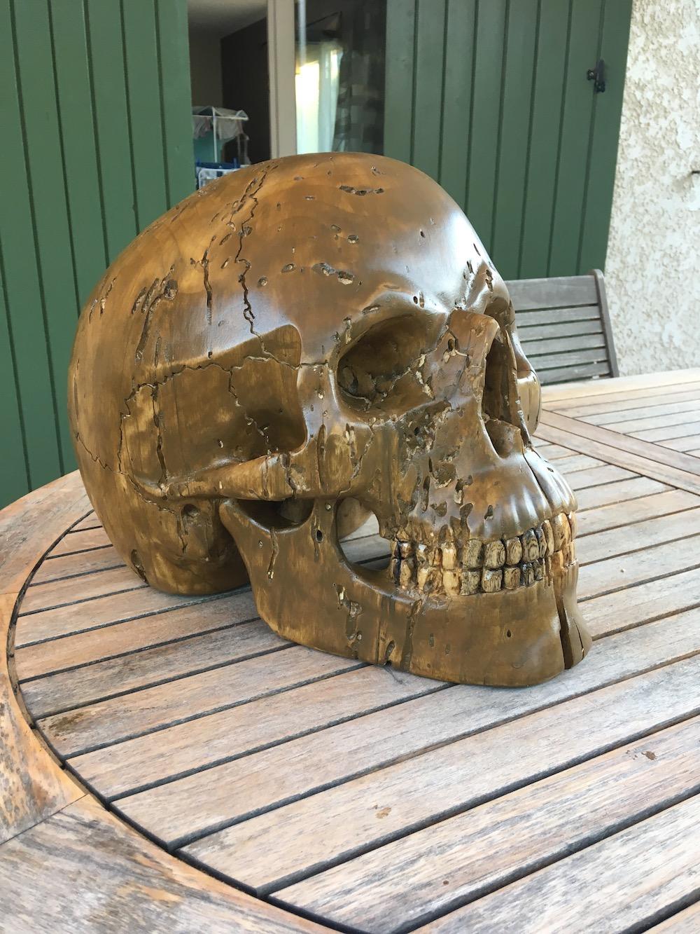 Crâne en micocoulier échelle 2 Img_3817