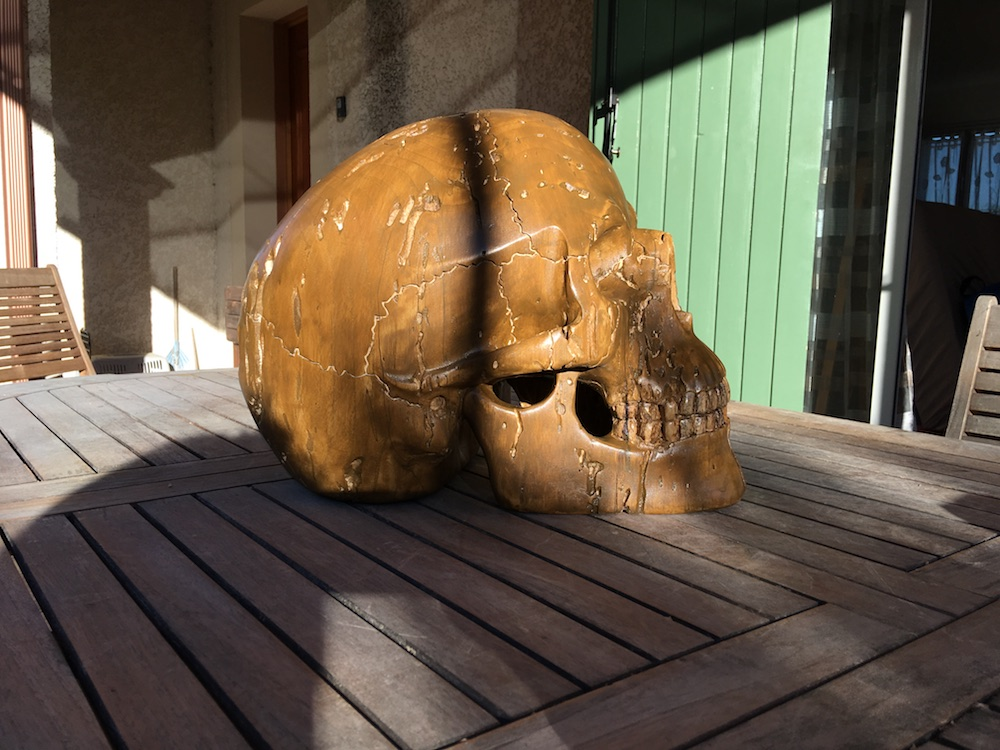 Crâne en micocoulier échelle 2 Img_3818