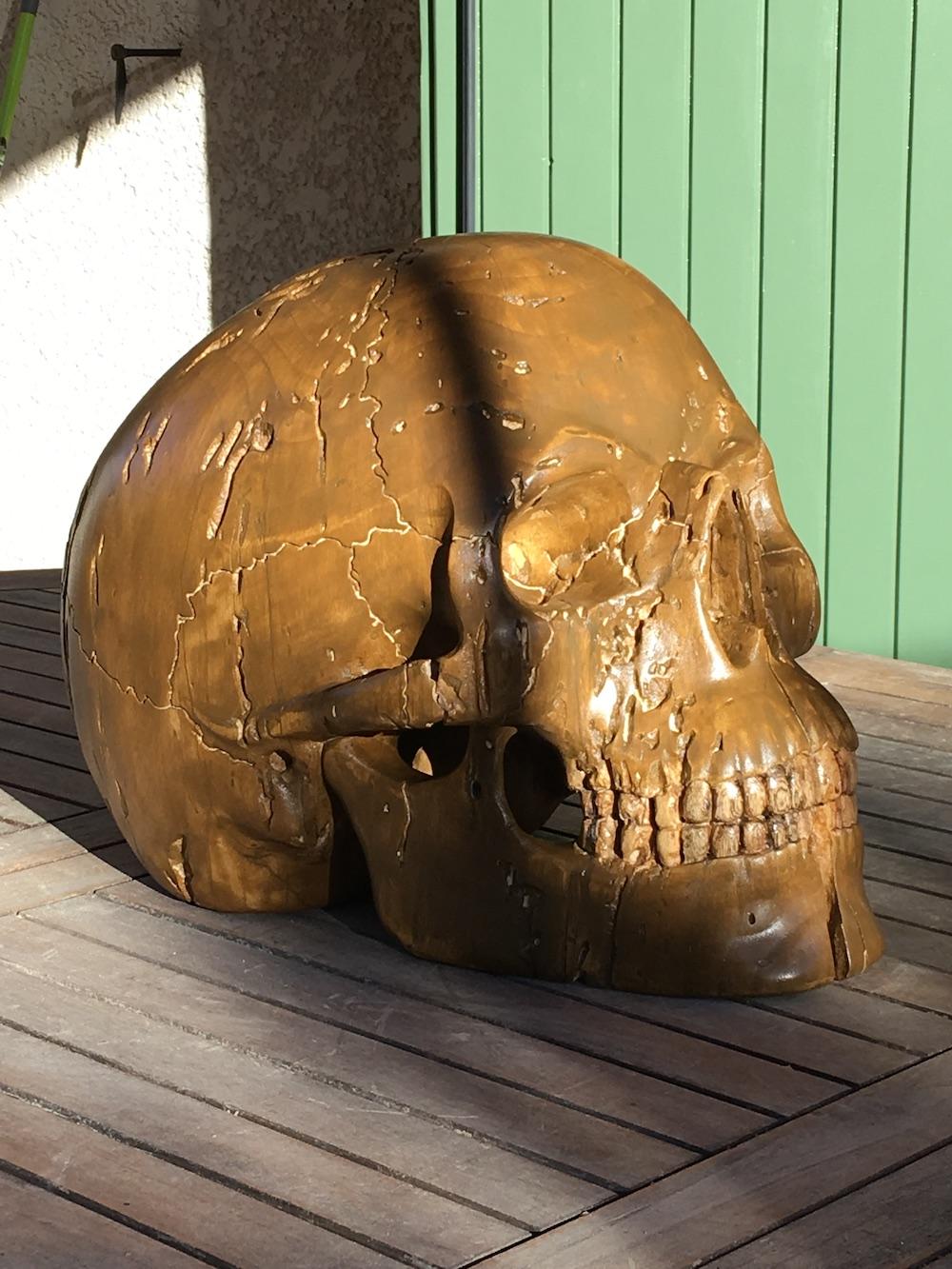 Crâne en micocoulier échelle 2 Img_3819