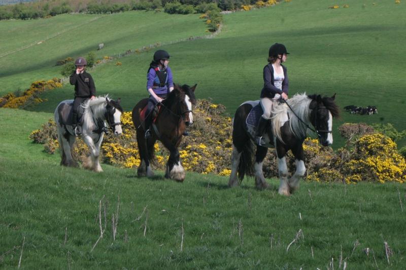 Sejours linguistiques + equestres en Irlande Lislee10