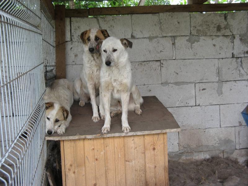fata - FATA, née le 12/06/2009, arrivée chiot au refuge (soeur de Mickey et fille de Tara) - en FA dans le 49 - GARANT - SOS -R-FB-SC-30MA Pictu302