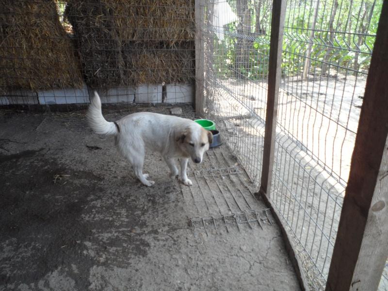fata - FATA, née le 12/06/2009, arrivée chiot au refuge (soeur de Mickey et fille de Tara) - en FA dans le 49 - GARANT - SOS -R-FB-SC-30MA Pictur25
