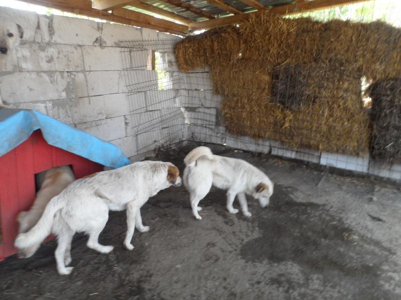 fata - FATA, née le 12/06/2009, arrivée chiot au refuge (soeur de Mickey et fille de Tara) - en FA dans le 49 - GARANT - SOS -R-FB-SC-30MA Pictur26