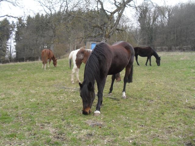 cheval - Constituer un groupe de chevaux - Page 3 Sdc12914