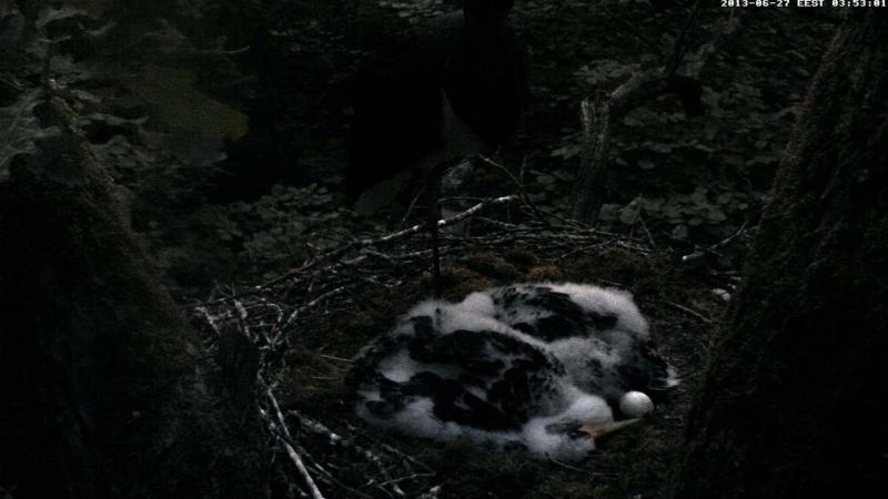 Black Stork ~ Tiit & Tiina ~ 2013 - Page 2 Taaabb22