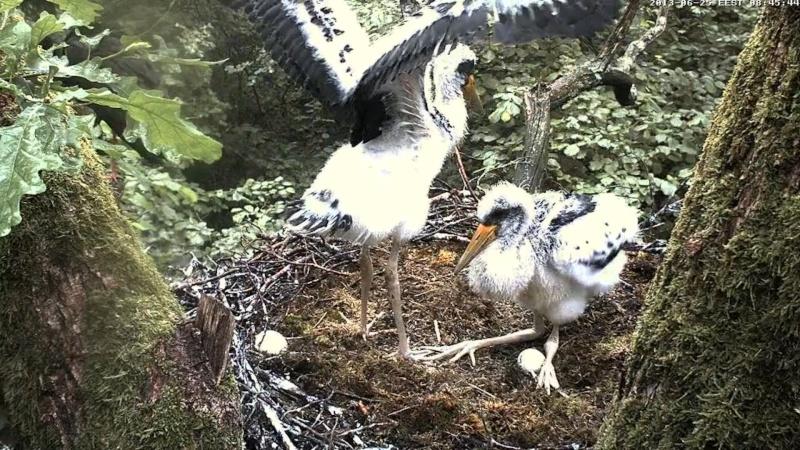 Black Stork ~ Tiit & Tiina ~ 2013 - Page 2 Uucuaa10