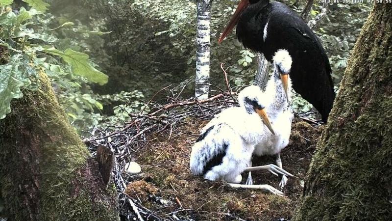 Black Stork ~ Tiit & Tiina ~ 2013 - Page 2 V16