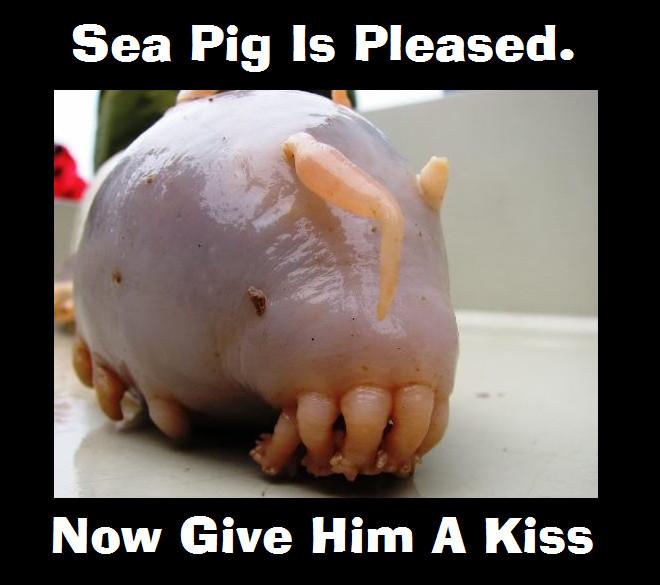 Thé, Ombrelle et Octopus, une rencontre avec Gail Carriger ! Sea_pi10