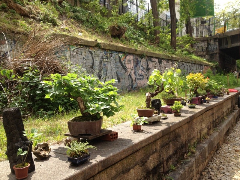 Urban bonsaïs Img_6710