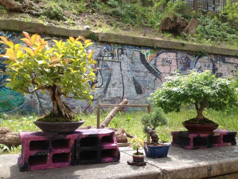 Urban bonsaïs Img_6711