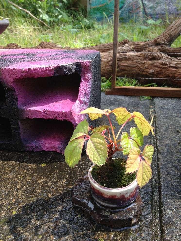 Urban bonsaïs Img_6811