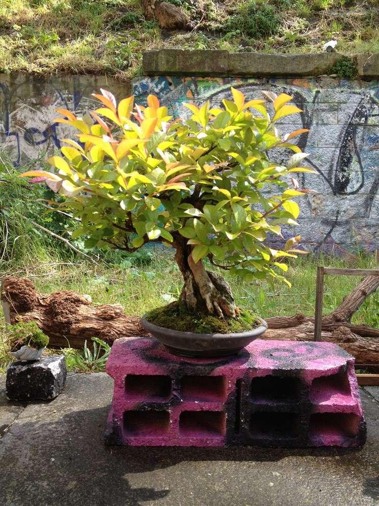 Urban bonsaïs Img_6812