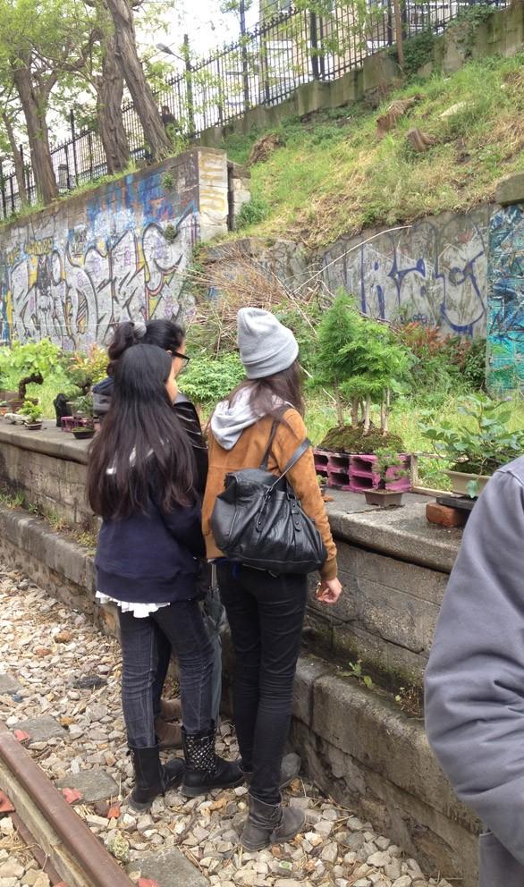 Urban bonsaïs Img_6814