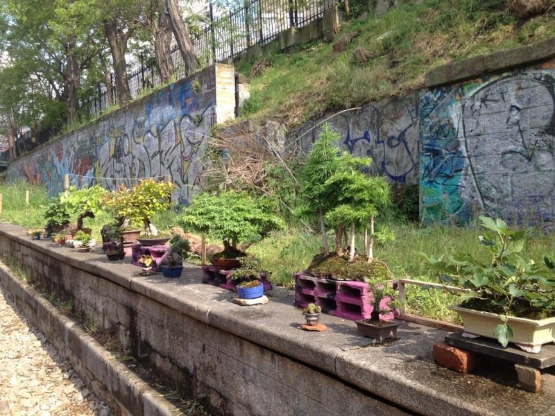 Urban bonsaïs Img_6815