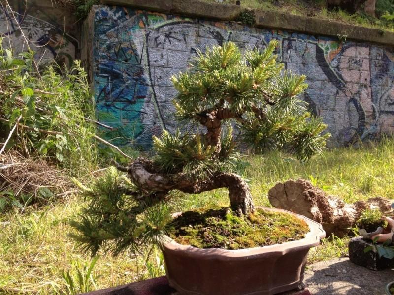 Urban bonsaïs Img_6817